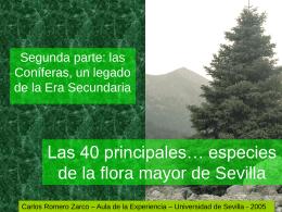 Las 40 principales… especies de la flora mayor de Sevilla