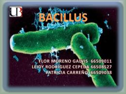 GENERALIDADES DE LOS BACILLUS