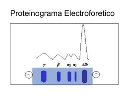 Proteinograma Electroforetico
