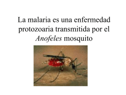 Mosquito Illnesses