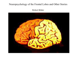 Frontal Lobe Anatomy - Center for Cognitive …