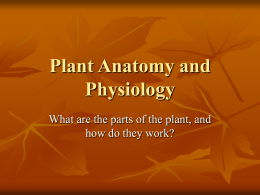 Plant Anatomy and Physiology - PowerPoint
