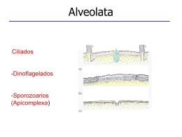Apicomplexa - Generalidades