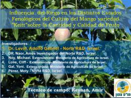 תגובת עצי מנגו להשקיה גירעונית בשלבים פנולוגיים שונים