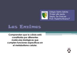 Las Enzimas - Colegio Santa Sabina