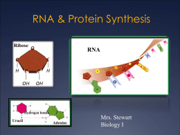 Biology 1 Notes Chapter 12 - DNA and RNA Prentice Hall