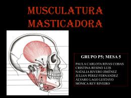 MUSCULATURA MASTICADORA