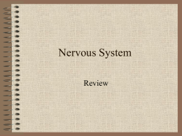 Nervous System - Woodland Hills School District