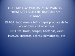 EL TIEMPO LAS PLAGAS Y LAS PLANTAS PRONOSTICOS …