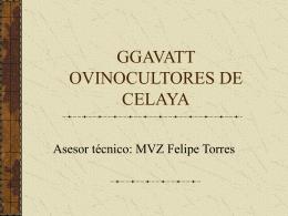 GGAVATT OVINOCULTORES DE CELAYA
