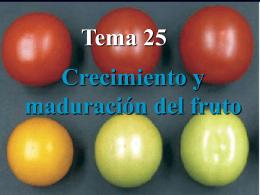 Tema 28 - OpenCourseWare de la Universidad de Oviedo