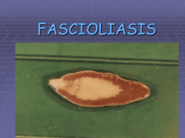 FASCIOLASIS - biblioceop
