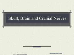 Skull, Brain and Cranial Nerves - Home Page