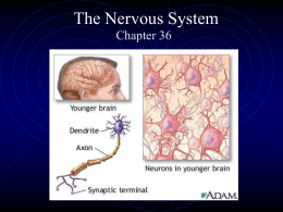 The Nervous System - Palatine High School