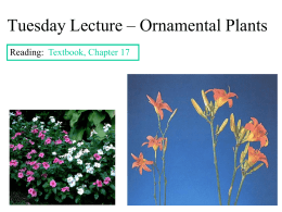 Tuesday Lecture – Ornamental Plants