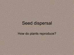 Seed dispersal - Primary Resources