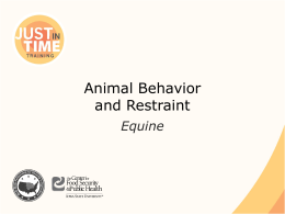 Animal Behavior and Restraint: Equine