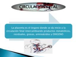 CIRCULACION FETAL