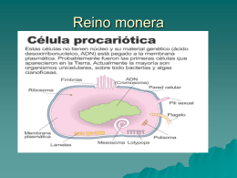REINO MONERA - biologiagreenvalley