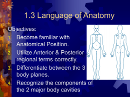 1.3 Language of Anatomy - halkuffanatomy