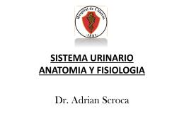SISTEMA URINARIO ANATOMIA Y FISIOLOGIA