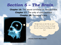 Section 6 – The Brain