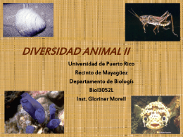 LAB.06 DIVERSIDAD ANIMAL II - Recinto Universitario de