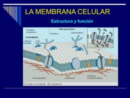 membrana ceular - LICEO CAMILO HENRIQUEZ