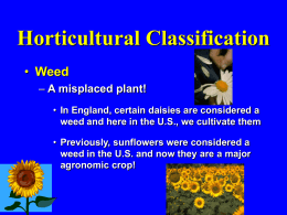 Horticulture Classification