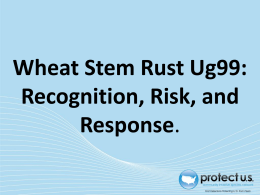 Recognizing and Responding to Wheat Stem Rust