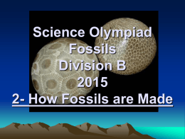 Science Olympiad Fossils Division B