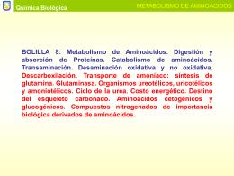 METABOLISMO DE AMINOACIDOS (Bolilla 9)