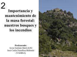Importancia y mantenimiento de la masa forestal: nuestros bosques