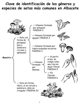 Clave dicotómica de los géneros de setas de Albacete