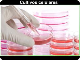 Cultivos celulares Células transformadas (2)