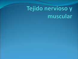 Tejido nervioso y muscular
