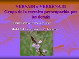 VERVAIN o VERBENA 31