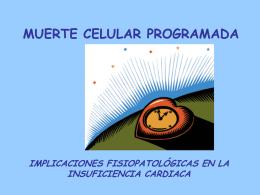 2) Apoptosis. Fisiología e implicaciones fisiopatológicas en la IC