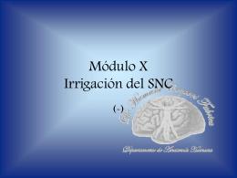 Irrigación del SNC