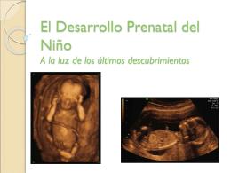 El_Desarrollo_Prenatal_del_Niño.