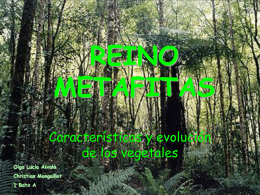 REINO METAFITAS