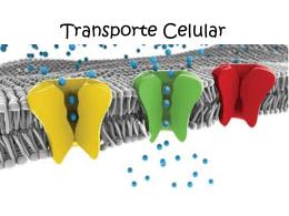 transporte_celular_prueba
