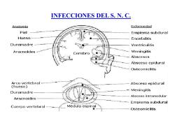 Diagnóstico microbiológico de infecciones del sistema nervioso