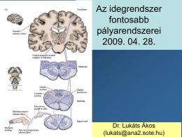 Az idegrendszer fontosabb pályarendszerei