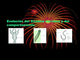 Evolución del Sistema Nervioso y del Comportamiento (D.Diaz)