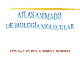 ATLAS ANIMADO DE BIOLOGIA MOLECULAR 1