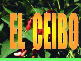 420451_LEYENDA_EL_CEIBO