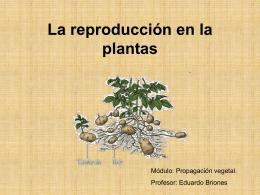 Introducción a la Propagación vegetal