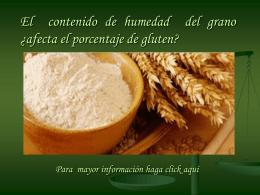 El alto contenido de Humedad ¿Afecta el porcentaje de gluten