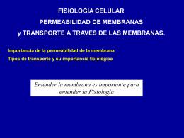 Transporte de membrana a